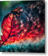 Flaming Fall Color Metal Print