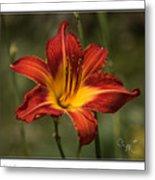 Flaming Lily Metal Print