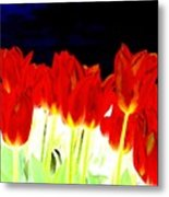 Flaming Red Tulips Metal Print