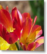 Flaming Tulips Metal Print