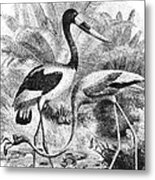 Flamingo & Jabiru Metal Print