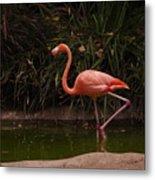 Flamingo 1 San Diego Zoo Metal Print
