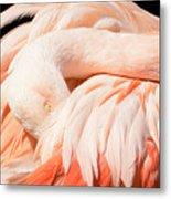 Flamingo Abstract Metal Print