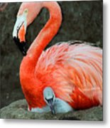 Flamingo And Baby Metal Print