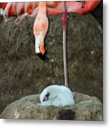Flamingo And Chick Metal Print