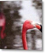 Flamingo And Rain Metal Print