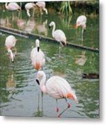 Flamingo Bath  Metal Print