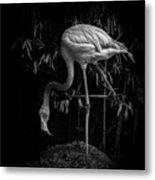 Flamingo Classic Bw Metal Print