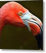 Flamingo Closeup Metal Print