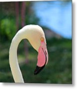 Flamingo Closeup Metal Print