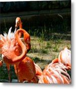 Flamingo Colony Metal Print