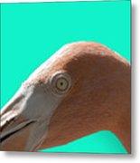 Flamingo Eye Metal Print