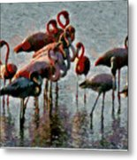 Flamingo Family Metal Print