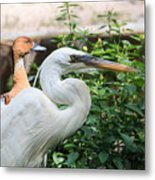 Flamingo Gardens - Great Egret Profile Metal Print