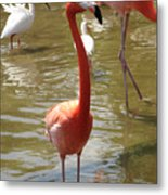 Flamingo II Metal Print
