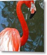 Flamingo In Profile Metal Print
