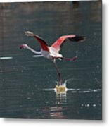 Flamingo Kick Off  Metal Print