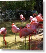Flamingo Land Metal Print