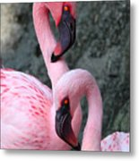 Flamingo Love Birds Metal Print