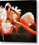 Flamingo Mingles Metal Print