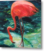 Flamingo Of Homasassa Metal Print