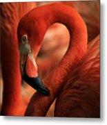 Flamingo Poised Metal Print
