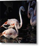 Flamingo Study - 2 Metal Print