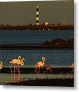 Flamingo Sunrise Metal Print