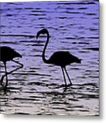 Flamingo Walk - Venezuela Metal Print