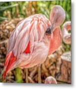Flamingo2 Metal Print