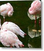 Flamingos 10 Metal Print