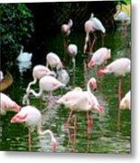 Flamingos 6 Metal Print