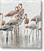 Flamingos Family Metal Print