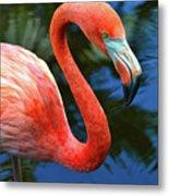 Flamingo Wading In Pond Metal Print