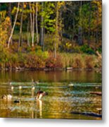 Flapping For Fall Metal Print