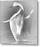 Flapping In Black And White Metal Print