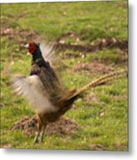 Flapping The Wings Metal Print