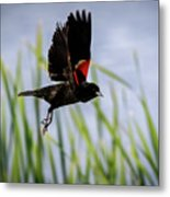 Flash Of Red Metal Print