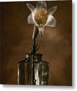 Flashlight Series Easter Lily 3 Metal Print