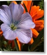 Flax And Aster Metal Print