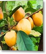 Fleshy Yellow Plums On The Branch Metal Print