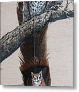 Flicker Metal Print