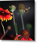 Flight Of A Honey Bee Metal Print