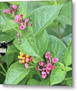 Flight Of The Bumble Bee Metal Print
