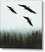 Flight Of The Eagles Metal Print