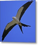 Flight Of The Kite Metal Print