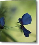 Flight Of The Lobelia  Metal Print