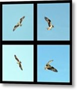 Flight Of The Osprey Metal Print