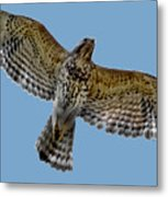 Flight Of The Red Shouldered Hawk Metal Print
