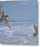 Flight Of The Sanderlings Metal Print